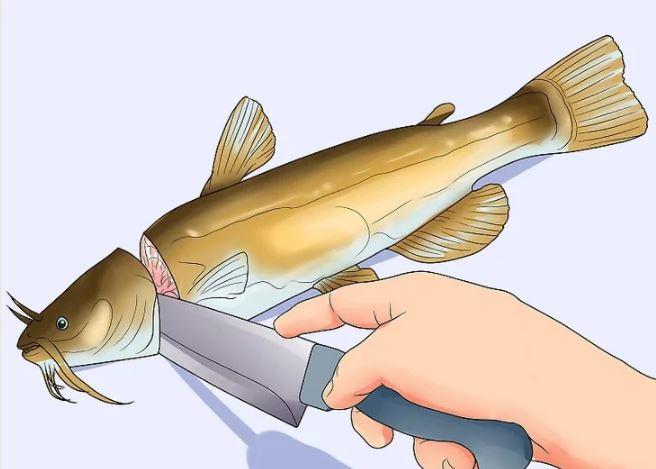 چگونه ماهی را تمیز کنیم؟ (روش فیله، پاک کردن، و جدا کردن استخوان )